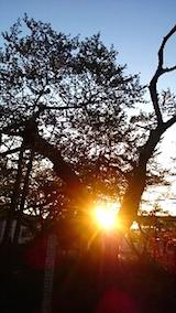 20150429神代桜2