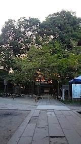 20150429薄墨桜1