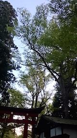 20150429伊佐須美神社1