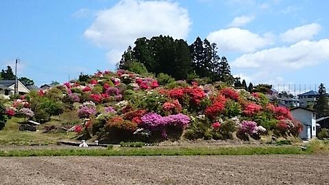 20150511ツツジの咲く丘の風景2