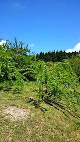 20150511山の様子八重紅枝垂れ桜のある斜面