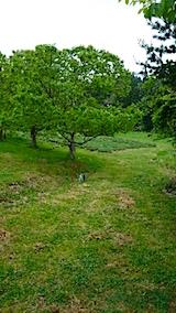 20150514ラベンダーの畑