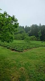 20150516ラベンダーの畑1