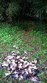 20150516タケノコの収穫3