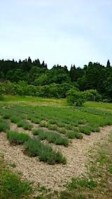 20150608ラベンダーの畑1