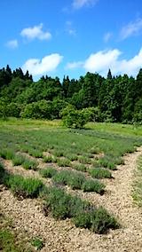 20150610ラベンダーの畑2