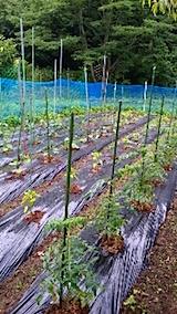 20150614野菜の畑