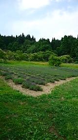 20150617ラベンダーの畑1