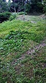 20150708ラベンダーの畑へと続く急な坂道の草刈り前の様子1