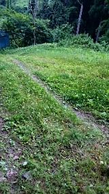 20150708ラベンダーの畑へと続く急な坂道の草刈り前の様子3