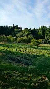 20150710ラベンダーの畑