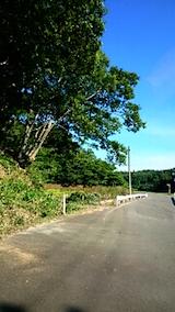 20150712山へ向かう途中の様子伐採されたケヤキの枝