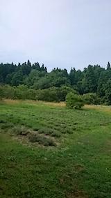 20150713ラベンダーの畑