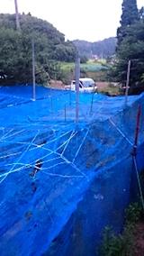 20150713野菜畑のネット張り5