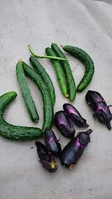 20150714野菜畑今日の収穫