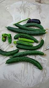 20150715野菜畑今日の収穫