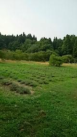 20150715ラベンダーの畑1