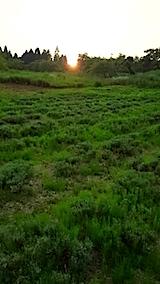 20150715ラベンダーの畑2