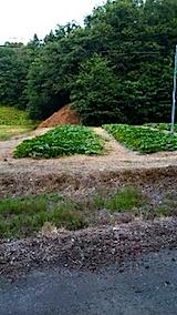 20150715山からの帰り道の様子カボチャ畑