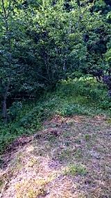 20150716草刈り前の様子2