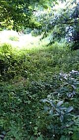 20150716草刈り前の様子3