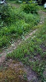 20150716草刈り前の様子4