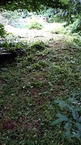 20150716草刈り後の様子3