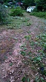 20150716草刈り後の様子4