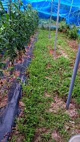 20150716野菜畑の草刈り前の様子