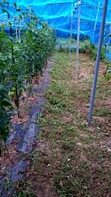 20150716野菜畑の草刈り後の様子1