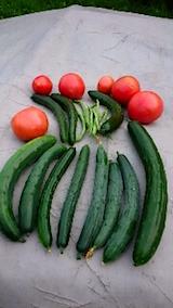 20150802野菜畑今日の収穫