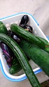 20150819野菜畑今日の収穫1