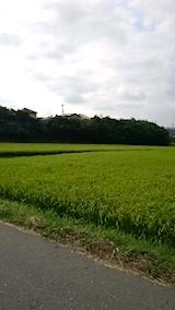 20150819山からの帰り道の様子田んぼ