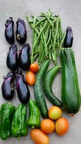 20150904野菜畑今日の収穫