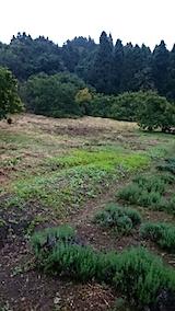 20150904山の様子草刈りの済んだ様子