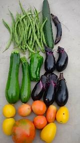 20150905野菜畑今日の収穫