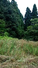 20150905栗畑の草刈り前の様子2