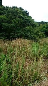 20150905栗畑の草刈り前の様子3
