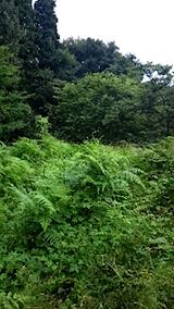 20150905栗畑の草刈り前の様子4