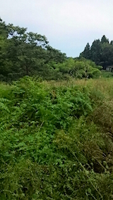 20150905栗畑の草刈り前の様子5