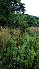 20150905栗畑の草刈り前の様子10