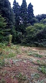 20150905栗畑の草刈り後の様子2