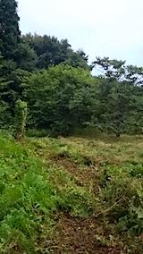 20150905栗畑の草刈り後の様子4