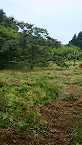 20150905栗畑の草刈り後の様子5