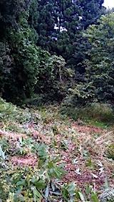 20150905栗畑の草刈り後の様子6