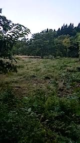 20150905栗畑の草刈り後の様子9