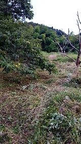 20150905栗畑の草刈り後の様子10