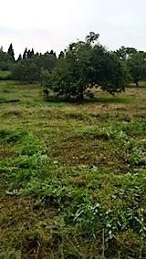 20150905栗畑の草刈り後の様子12