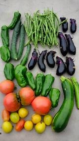 20150910野菜畑収穫した野菜