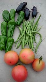 20150911野菜畑収穫した野菜